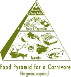 Carnivore Food Pyramid